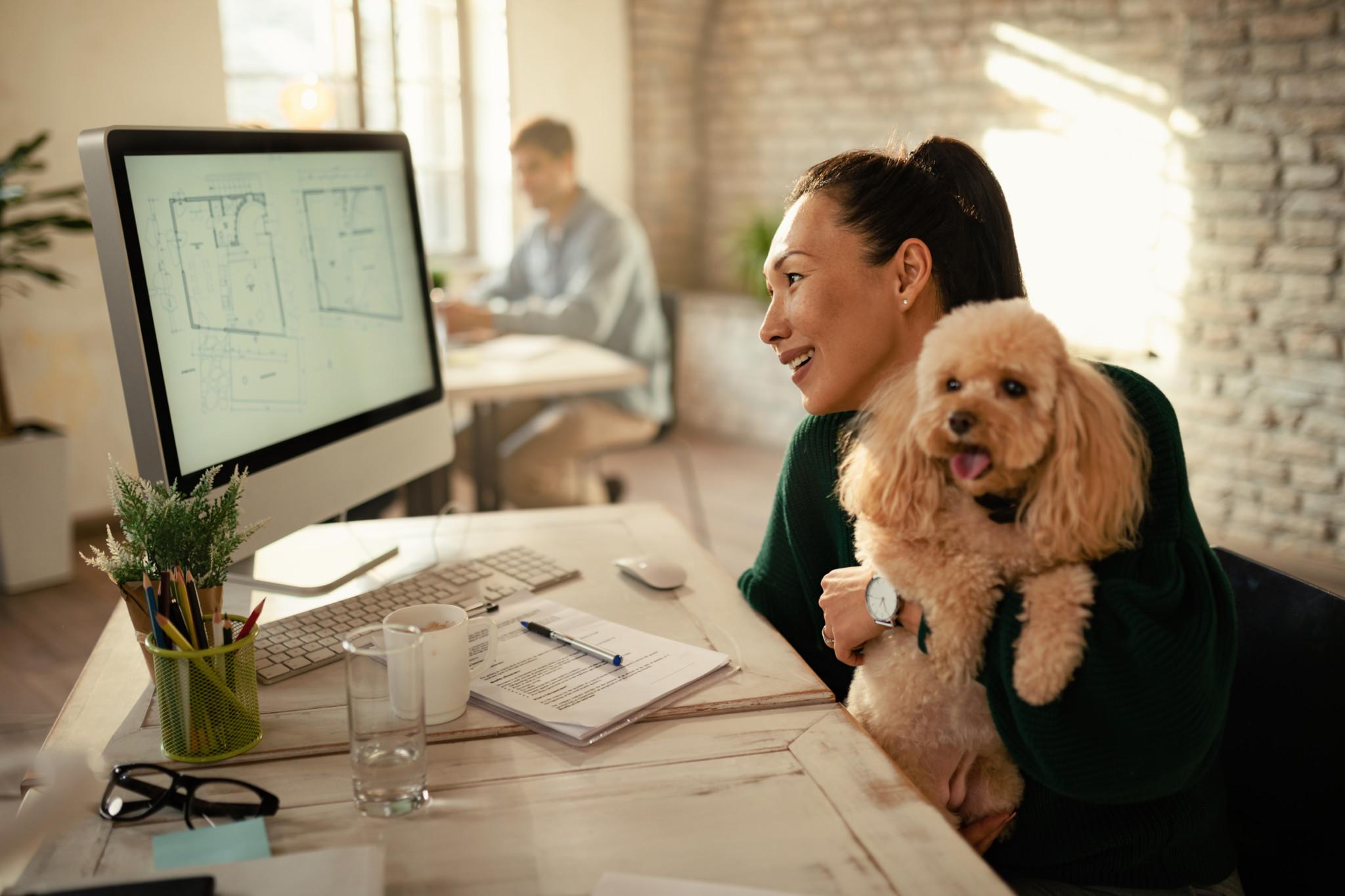 Pet friendly workplaces